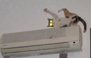 gatto che cade